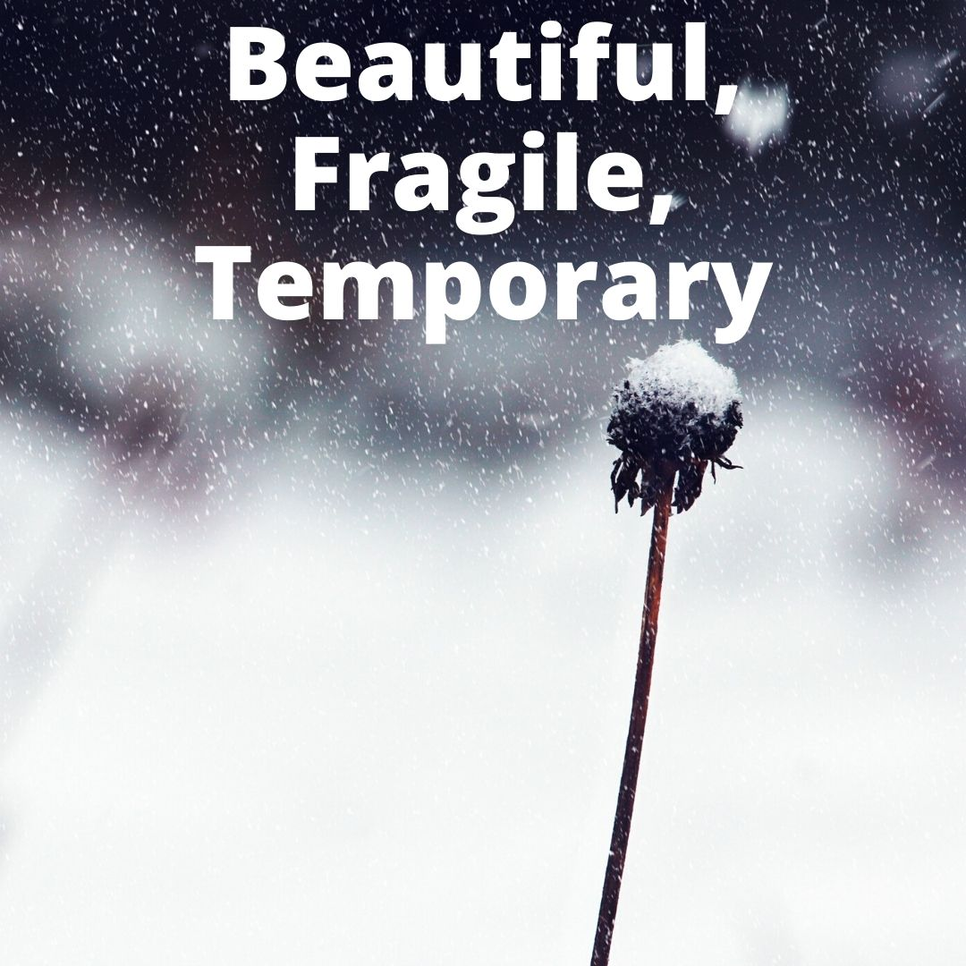 Beautiful Fragile Temporary